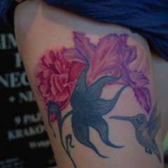 Carnation Flower on Carnation  Orchid    Hummingbird Flower Tattoo